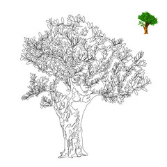 olive tree. antistress coloring page. vector illustration