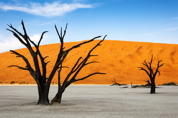 Trees and red dunes in Dead Vlei, Sossuslvei, Namibia; Concept for travel in Africa