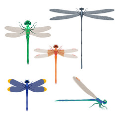 Dragonfly insects set vector illustration isolated on white background