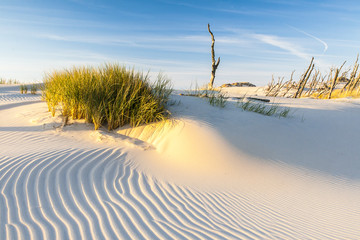 beautiful view of the coastal dunes