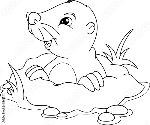 Mole Coloring Page Stock Image And Royalty Free Vector Files On