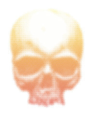 human skull vector illustration.