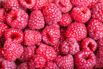 many berries of fresh raspberry close up