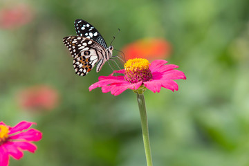 Beautiful butterfly with brightly colored flower