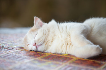 cute cat lying on woven mat selective focus