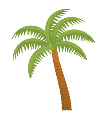 palm tree tropical nature summer beach plant icon. Colorful and isolated design. Vector illustration