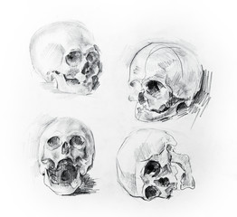 Skull study drawing. Pencil on paper.