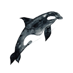 Killer Whale Watercolor hand-painted Illustration Sea animals Blue Whales Isolated Cute Kids
