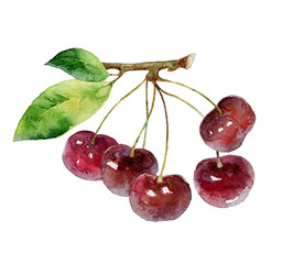 Cherry berries on white background