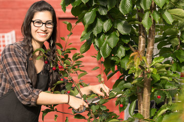 Pretty Woman Smiling Prunes Cherry Tree Backyard Fruit