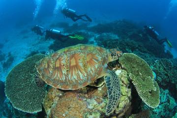 Sea turtle and scuba divers