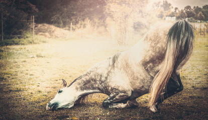Horse kneeling down, retro styled