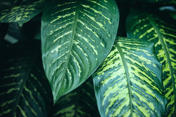 houseplant leaves