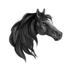 Black horse sketch of arabian mare