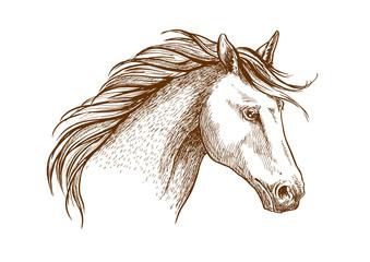 Horse sketch icon of arabian stallion