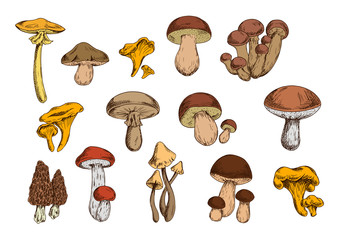 Mushrooms vector isolated icons set