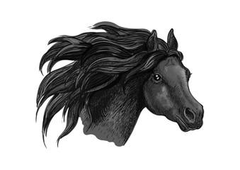 Black mustang horse sketch portrait