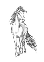 Horse standing with waving mane pencil sketch