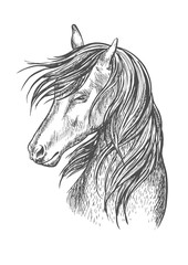 Black horse mustang sketch portrait