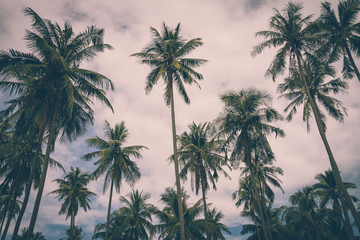 Coconut palm tree summer holiday - Vintage tone