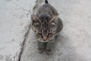 Gray cat guarding the backyard