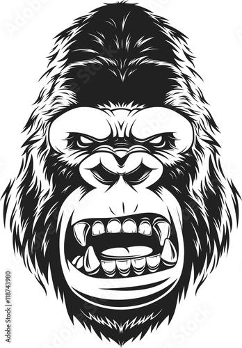 Gorilla Face Line Drawing : Quot vector illustration fierce gorilla head on white
