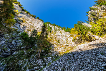 View from inside the canyon in Romanian mountains with spruce forest on top