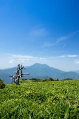 瓶ヶ森(かめがもり)から石鎚山方面を眺める