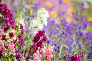 Beautiful Summer landscape image of vibrant wild flowers in mead