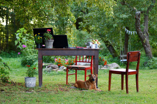 outdoor office in the garden with a dog