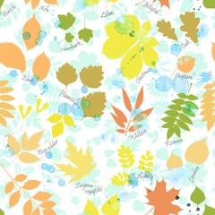 Vector seamless pattern of autumn multicolored leaves silhouettes and rain drops. Linden, ash, oak, maple, box elder, hawthorn, chestnut, birch, elm, willow, aspen, acacia, rowan, lilac, rowan