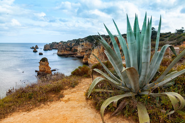 Wall Mural - Algarve coast with agave plant in foreground