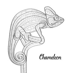 Hand drawn doodle outline chameleon illustration. Decorative in African indian totem Ethnic tribal aztec design. Patterned fiery on the grunge background. Sketch for adult antistress coloring page.