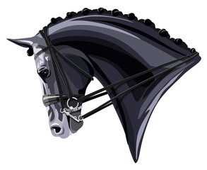 Black Dressage Horse head on white background