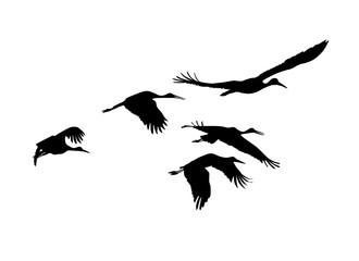 Storks flock. Vector silhouettes