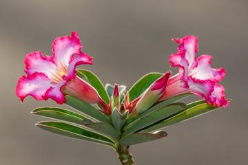 Photos Illustrations Et Videos De Fleurs Multicolores