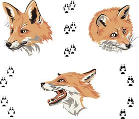 Fox, portrait, color, fox's snout, vector, silhouette, set