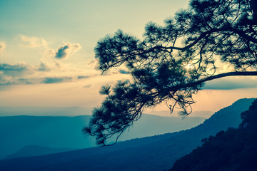 Pine forest on the mountain in twilight evening - vintage tone