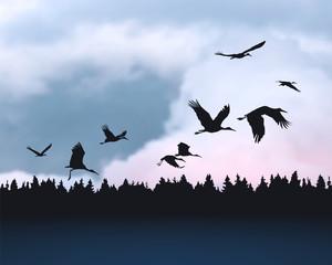 Stork birds silhuetes on sunrise cloudy sky