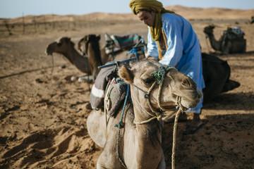 Berber man preparing camels for travel