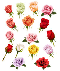 Wall Mural - Collection of different roses. Vector.