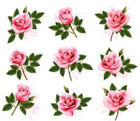 Fototapete - Set of beautiful pink roses. Vector.
