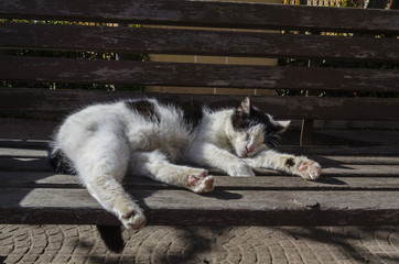 Cat sleeping on a bench outdoors