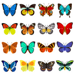 Butterflies Vector Set