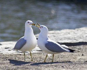 Background with two gulls staying on the shore
