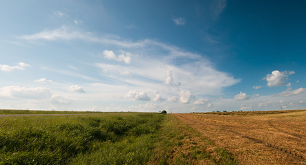 Fototapete - Rural landscape. Panorama of the field after harvest. Summer and autumn in one image