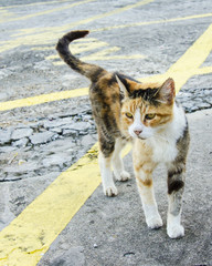 A stray hungry kitty spotted on the street of New Orleans, Louisiana.