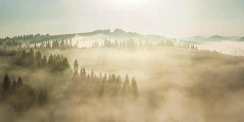 Poster Morning with fog Majestic landscape with forest