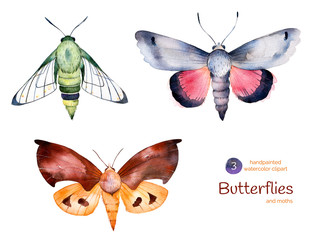 Set of high quality hand painted watercolor Butterflies and moths.3 illustrations isolated for you unique creation.Can be used for projects,template and greeting cards,patterns,quotes,invitations etc
