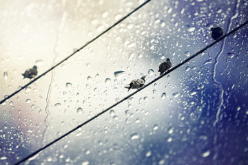 A group of pigeons perched on wires ,view through the window of strong rainy day with selective focus.